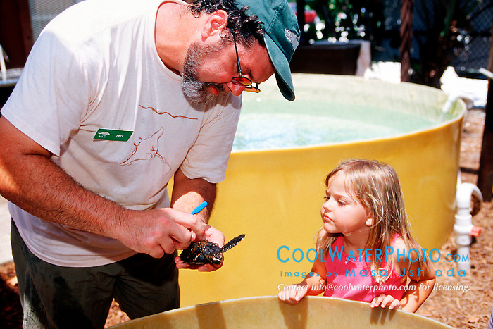 volunteer shows a baby .hawksbill sea turtle to a child, .Eretomochelys imbricata, .Marine Center of Juno Beach, Florida.