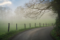 Great Smoky Mountains National Park, Tennessee:<br /> Foggy country lane and fence line in Cades Cove, early spring