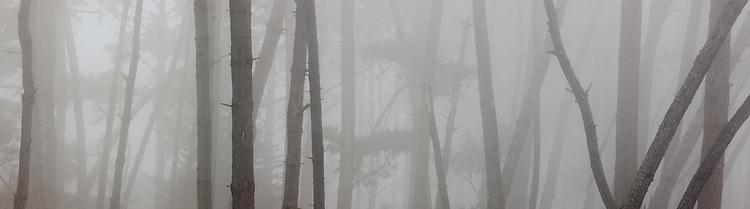 Fog, Skyline Forest, Monterey, California 2009