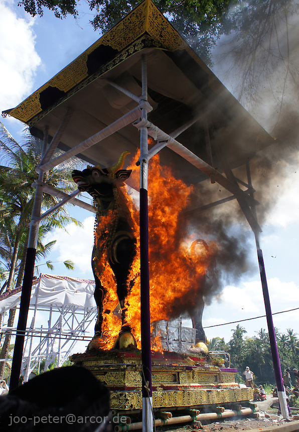 bull sarcophagus burning during cremation ceremonies of  higher cast brahman family member, puri agung sayan Oka Willy S, village Sayan, Bali, archipelago Indonesia, 2010