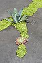 "John Warland and Sim Flemons' ""Concreation"" garden, RHS Hampton Court Flower Show 2009."