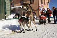 Diana Moroney Wheel Dogs Lunge to Go @ Takotna Chkpt 2005 Iditarod
