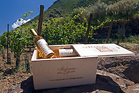 Salina, Eolian Islands, Italy, June 2006. The Giona Malvasia wines of Salina are among the best in its sort. The Volcanic Eolian Islands of Southern Italy offer a spectacular landscape for trekking while staying in picturesque towns. Photo by Frits Meyst/Adventure4ever.com