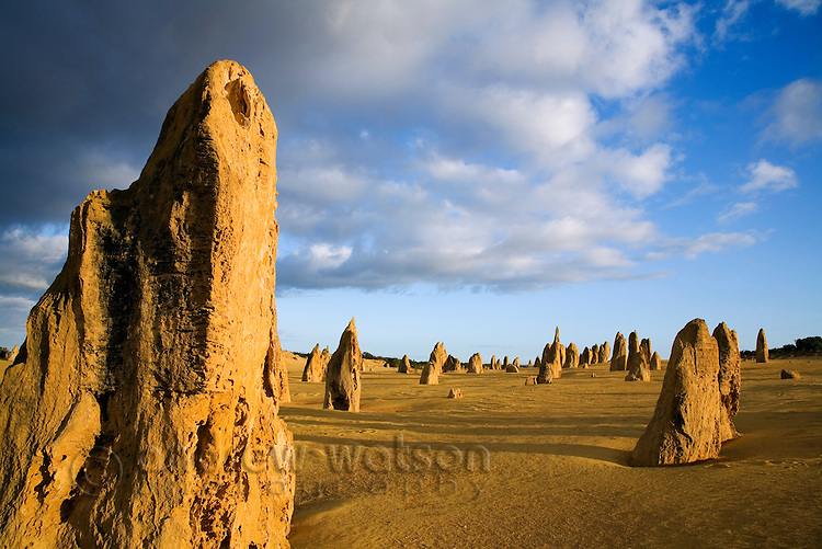 Morning light at the Pinnacles Desert in Nambung National Park.  Cervantes, Western Australia, AUSTRALIA.