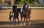 LOUISVILLE, KY - MAY 01: Instilled Regard walks on track to prepare for the Kentucky Derby at Churchill Downs on May 1, 2018 in Louisville, Kentucky. (Photo by Alex Evers/Eclipse Sportswire/Getty Images)