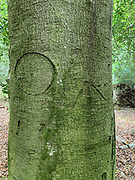 BNPS.co.uk (01202 558833)<br /> Pic: NewForestNPA/BNPS<br /> <br /> Pictured: There are examples on display of concentric circles, known as 'witches marks', which were carved to ward off evil spirits. A 'Kings Mark' is also pictured to the right of the tree.<br /> <br /> Fascinating ancient graffiti which was carved into the trees of the New Forest centuries ago is being formally recorded for the first time.<br /> <br /> Initials, dates, pictures, poems and royal marks which vary in size from 4ins to 2ft can be found throughout the national park in Hampshire.<br /> <br /> There are also various examples on display of concentric circles, known as 'witches marks', which were carved to ward off evil spirits.<br /> <br /> In total, hundreds of examples of 'tree graffiti' are being documented in a new database set up by the New Forest National Park Authority.<br /> <br /> One of the most common marks is the 'King's Mark', a broad arrow head used to identify trees reserved for building Royal Navy ships in the 18th and early 19th century. Other graffiti includes names, signs and pictures of eagles, boats, homes and people.
