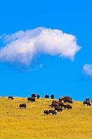 USA-South Dakota-Custer State Park