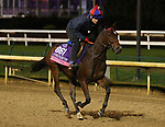 November 01, 2018 : Pivottina in preparation for the Breeders' Cup on November 01, 2018 in Louisville, KY.  Candice Chavez/ESW/CSM