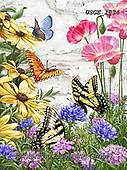 Dona Gelsinger, FLOWERS, BLUMEN, FLORES, paintings+++++,USGE1834,#f#, EVERYDAY,butterfly,butterflies