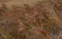 Flow<br />