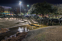 This bronze scuplture is in Pioneer Plaza in downtown Dallas and with the water and terrane gives the appearance of what a real cattle drive of Texas Longhorns might look like.  This is second most visited site in Dallas.