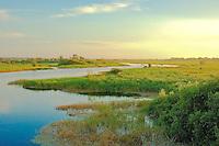 Dawn on the Myakka River in SW Florida.