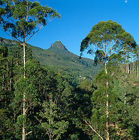 Sri Lanka, Adam's Peak or Sri Pada, country's Holiest Mountain | Sri Lanka, Adam's Peak oder Sri Pada (heiliger Fuss)