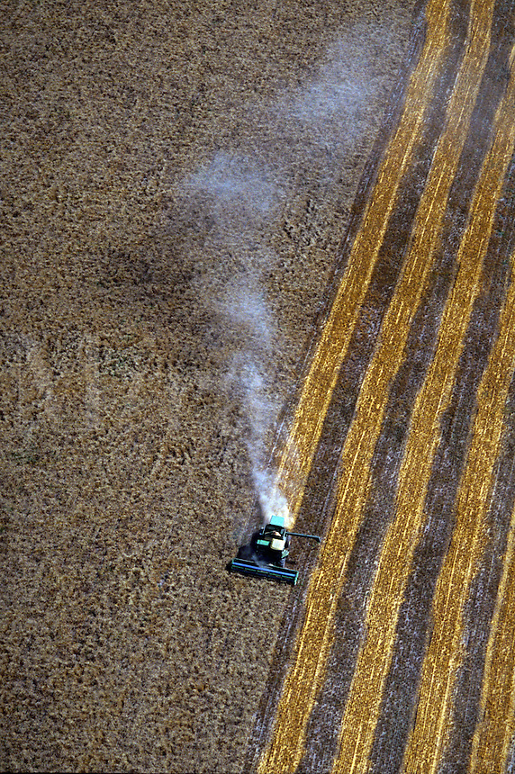 Aerial of combine cutting wheat field