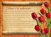 Alfredo, FLOWERS, BLUMEN, FLORES, paintings+++++,BRTOLP20465,#F# ,parchment,