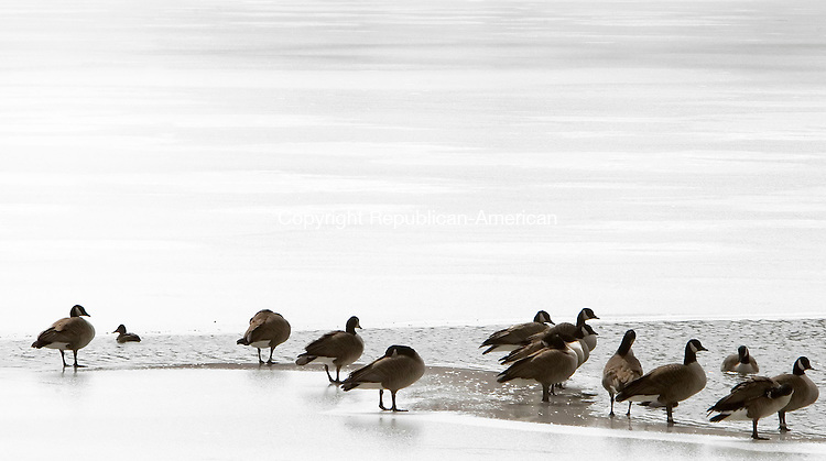 WARREN, CT--18 MARCH 2007--031807JS04-A flock of Canada Geese rest on Lake Waramaug in Warren near an area of the lake that has begun to thaw.  <br /> Jim Shannon / Republican-American