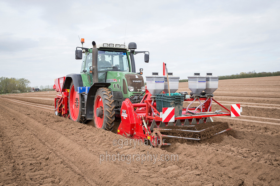 Planting Ramos potatoes, cultivating with a front mounted Grimme GF 180 cultivator and incorporating Nemathorin - Lincolnshire, April