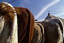 05/10/04 - BRION - PUY DE DOME - FRANCE - Foire de Brion - Photo Jerome CHABANNE