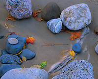 Pictured Rocks National Lakeshore, MI<br /> Beach detail of stones, fall colored leaves and pine needles