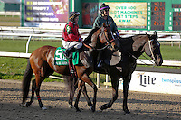 January 17, 2015: String King (LA) with James Graham in the Col. E.R. Bradley Handicap at the New Orleans Fairgrounds course. Steve Dalmado/ESW/CSM