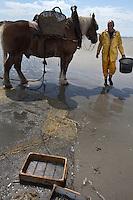 il pescatore di gamberetti Xavier Vanbillemont e il suo cavallo sulla spiaggia dopo la pesca ai gamberetti