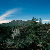 Ponderosa Pine (Pinus ponderosa) and Quaking Aspen (Populus tremuloides) Trees growing through Hardened Lava Flow in Sunset Crater Volcano National Monument, near Flagstaff, Arizona, USA