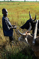 BURKINA FASO, Bobo Dioulasso, village  Bama, rice farming for Hybrid seed production, farmer with ox plough the soil / Dorf Bama, Reis Hybrid Saatgut Anbau fuer  Firma Nafaso, Saatgutherstellung, Farmer pfluegen Reisfeld mit Ochsen