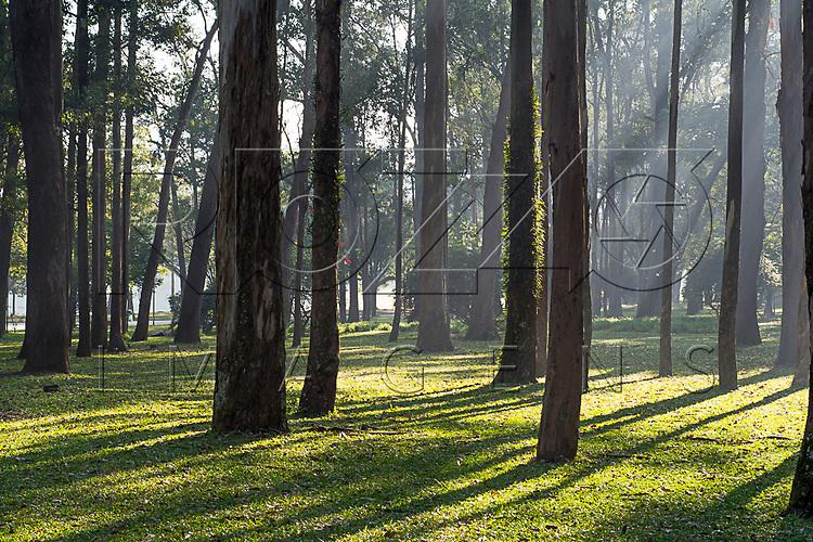 Troncos de árvores no Parque do Ibirapuera, São Paulo - SP, 06/2016.