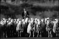Pastori Sardi. Barbagia.<br /> un pastore conduce il gregge al pascolo.