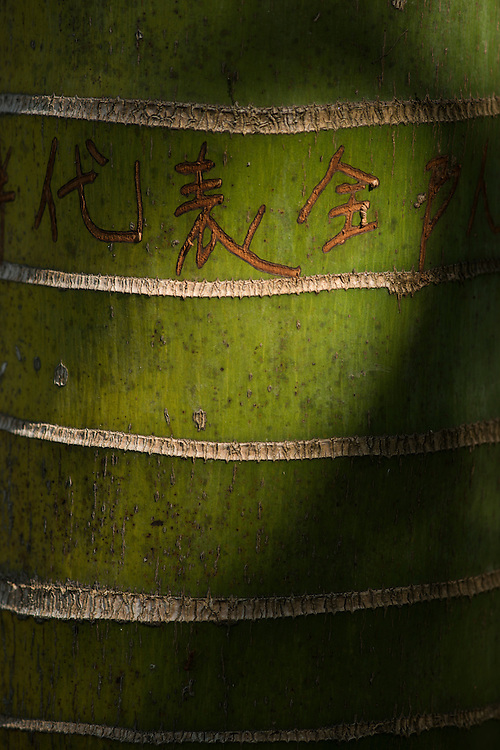 Graffiti carved into the trunk of a palm tree in the Xishuangbanna Tropical Botanic Gardens.