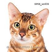 Xavier, ANIMALS, REALISTISCHE TIERE, ANIMALES REALISTICOS, FONDLESS, photos+++++,SPCHWS630,#A#