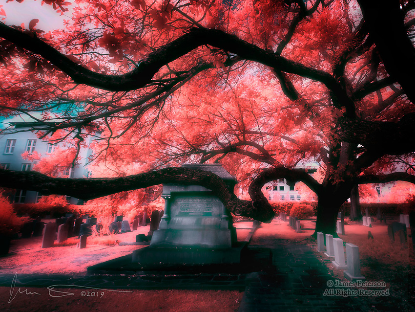 Graveyard Oak, Charleston (Infrared).  Here's another one of those gnarly Charleston oaks, this time guarding the headstones in the cemetery of Saint Phillip's Church in the historic section of town.<br /> <br /> Image ©2019 James D. Peterson