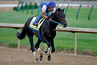 LOUISVILLE, KENTUCKY - APRIL 30: Untrapped, owned by Michael Langford and trained by Steve Asmussen, exercises in preparation for the Kentucky Derby at Churchill Downs on April 30, 2017 in Louisville, Kentucky. (Photo by Jon Durr/Eclipse Sportswire/Getty Images)