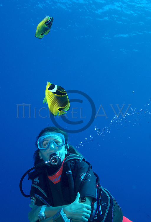 Racoon Butterflyfish Chaetodon lunula with diver, Indo Pacific, Tahiti, Bora Bora