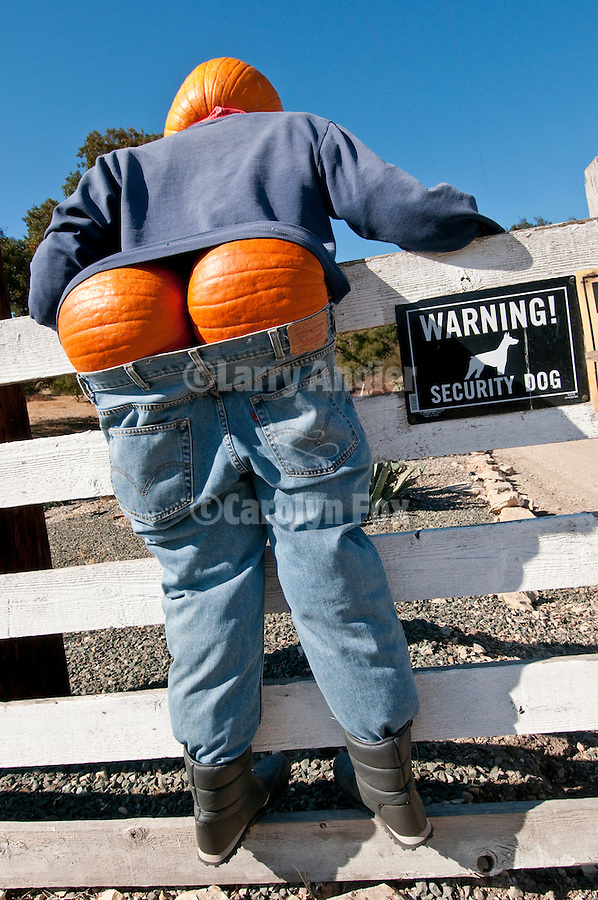 A pumpkin-head scarecrow hangs on a fence by the road with pants dropped moons drivers along the road in the Salinas Valley of Calif.