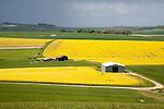 Chalk upland summer farming landscape on the Marlborough Downs, near Beckhampton, Wiltshire, England