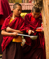 Buddhist monks performing the ritual of feeding trees during the Losar New Year ceremony inside a monastery in the Himalayan foothills of Sikkim, India