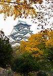 Osaka Castle, Osakajo view from behind yellow autumn trees on a misty morning. Osaka Castle Park in fall, Chūō-ku ward, Osaka city, Japan 2017