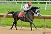 Valiant Boy SBFAR winning at Delaware Park on 5/27/13.