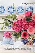 Marek, FLOWERS, BLUMEN, FLORES, photos+++++,PLMPMG1306,#f# roses