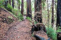 Path through the Big Sur redwoods.
