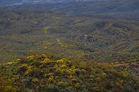 Spring blooms in the hills and mountains of the Sierra Lampazos, Tepache, Sonora, Mexico March 2020....<br /> <br /> Primavera florece en los cerros y montañas de la  Sierra Lampazos, Tepache, Sonora, Mexico Marzo 2020.  Ruta de la Sierra<br /> (Photo by Luis Gutierrez/NortePhoto.com)