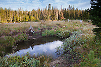 Creek wiith watering hole in California native plant meadow headwaters of American River.