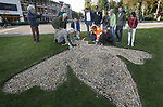 Foto: VidiPhoto<br /> <br /> BREDA &ndash; In het Wilhelminapark in Breda is donderdag het offici&euml;le startsein gegeven voor een meerjarig en bijvriendelijk beplantingsplan. Dit najaar wordt in verschillende wijken zo&rsquo;n 1.250 vierkante meter met een mengsel van voorjaarsbloeiende bollen beplant. Tevens krijgen vaste planten weer een belangrijke rol en worden kruidenmengsels geplant in het openbaar groen. Behalve dat de Bredase wijken daarmee een eigen kleurijke en thematisch uiterlijk krijgen, wordt zo ook de biodiversiteit gestimuleerd. Nectar en stuifmeel zijn van levensbelang voor bijen, die op hun beurt onmisbaar zijn voor de voedselketen op aarde. Ook de Nederlandse Bijenhoudersvereniging is daarom als adviseur betrokken bij de aanplant van nectarrijke bollen in diverse Nederlandse steden. Bijvriendelijke bloembollen zoals krokussen, sneeuwroem, botanische tulpen en allium bloeien van februari tot en met mei, een periode waarin er relatief weinig voedsel voor bijen beschikbaar is. Foto: Het aanplanten van een logo in de vorm van een vliegende bij in het Bredase Wilhelminapark.