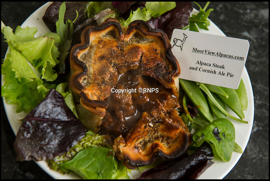 BNPS.co.uk (01202 558833)<br /> Pic: PhilYeomans/BNPS<br /> <br /> Cute, cuddley...tasty!<br /> <br /> Alpaca & ale pie.<br /> <br /> A Cornish farmer has come up with the latest in tasty treats...Alpaca pies. <br /> <br /> Alpaca breeder Emma Collison has started selling the unusual snacks from her farm on Bodmin moor in Cornwall. <br /> <br /> Alpaca, pasties, rolls and pies are now flying off the shelves as people develop a taste for the South American Camelid's lean, low fat & low cholesterol meat. <br /> <br /> Emma believe's that to keep a healthy population of alpacas you must make them useful in as many ways as possible, so along with the pies and pasties she also sells duvets, pillows and fleeces made with the alpacas extremely fine wool.