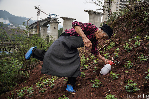 A 79-year-old unidentified former farmer ekes out a living as a new urbanite by growing vegetables under a new bridge on land that has been claimed by the government to build relocation housing project in the southwestern Chinese megapolis of Chongqing.<br /> <br /> She and her neigbours were all moved from their farmland and resettled nearby in a purpose-built estate. <br /> <br /> Some bemoan the poor relocation compensation but others are happy to enjoy a social life away from the burden of farming. <br /> <br /> China is pushing ahead with a dramatic, history-making plan to move 100 million rural residents into towns and cities between 2014 and 2020 &mdash; but without a clear idea of how to pay for the gargantuan undertaking or whether the farmers involved want to move.<br />