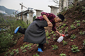A 79-year-old unidentified former farmer ekes out a living as a new urbanite by growing vegetables under a new bridge on land that has been claimed by the government to build relocation housing project in the southwestern Chinese megapolis of Chongqing.<br /> <br /> She and her neigbours were all moved from their farmland and resettled nearby in a purpose-built estate. <br /> <br /> Some bemoan the poor relocation compensation but others are happy to enjoy a social life away from the burden of farming. <br /> <br /> China is pushing ahead with a dramatic, history-making plan to move 100 million rural residents into towns and cities between 2014 and 2020 &mdash; but without a clear idea of how to pay for the gargantuan undertaking or whether the farmers involved want to move.<br /> <br /> Moving farmers to urban areas is touted as a way of changing China&rsquo;s economic structure, with growth based on domestic demand for products instead of exporting them. In theory, new urbanites mean vast new opportunities for construction firms, public transportation, utilities and appliance makers, and a break from the cycle of farmers consuming only what they produce.<br /> <br /> Urbanization has already proven to be one of the most wrenching changes in China&rsquo;s 35 years of economic reforms. Land disputes rising from urbanization account for tens of thousands of protests each year.