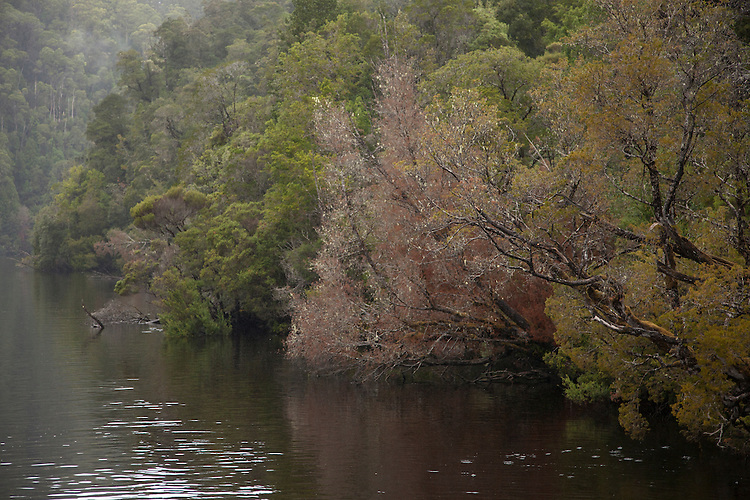 A cruise across Macquarie Harbour and up the Gordon River brings visitors face to face with the dense rainforest along the river banks