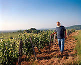 FRANCE, Montigny-les-Arsures, Arbois, Jacques Puffeney stands in his vines, Jacques Puffeney Winery, Jura Wine Region, Vin Jaune