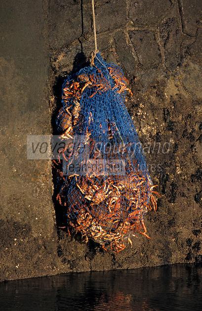 Europe/France/Pays de la Loire/85/Vendée/Ile d'Yeu/Port-Joinville: Retour de la pêche aux araignées